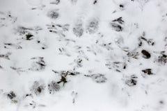 Следы ноги птиц на снеге стоковая фотография