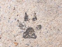 Следы ноги собаки или шаг собаки на конкретный взгляд улицы цемента Стоковые Изображения