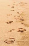 следы ноги Стоковая Фотография