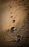 следы ноги стоковое фото