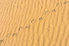 следы птиц Стоковая Фотография