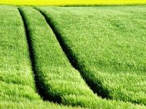 следы рапса урожая Стоковое фото RF