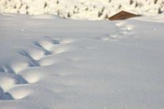 следы снежка Стоковое Фото