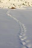 следы снежка стоковое фото rf
