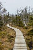 Следы через лес и вдоль променадов вокруг Berryh стоковые фото