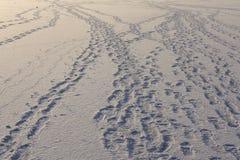 следы Стоковая Фотография RF