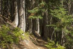 След в крутых древесинах Стоковое Изображение