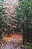 След в ландшафте горы леса осени красивом стоковое фото rf