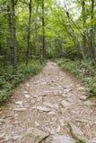 След в национальном парке Shenandoah Стоковая Фотография RF