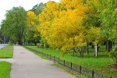 След в парке осени Стоковое Изображение