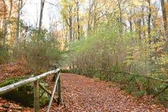 след в парке покрытом с листьями Стоковые Фото
