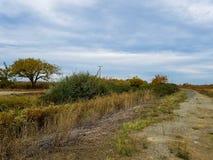След грязи с заводью Стоковая Фотография RF