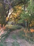 След грязи через деревья Стоковая Фотография RF
