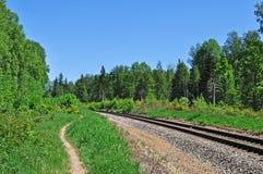 след железной дороги пущи Стоковые Фото