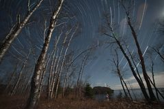 След звезды головы Pallisade Стоковое Изображение RF