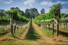 След исследования виноградника стоковое изображение