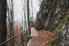 След и деревянный masonry в лесе осени среди гор стоковое фото