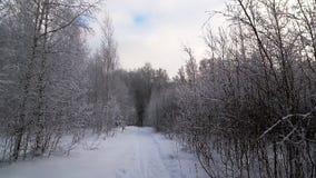 След леса зимы Деревья покрыты с снегом видеоматериал