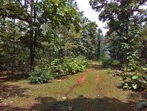 След леса национального парка в Индии стоковое фото