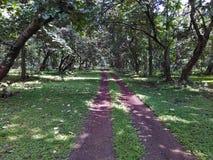 След леса национального парка в Индии стоковые фото