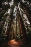 След леса покрытый с красной coniferous листвой стоковая фотография rf