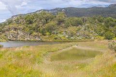 След, лес и река Lapataia, национальный парк Огненной Земли Стоковое Изображение