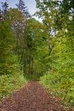 след листва Стоковые Фотографии RF