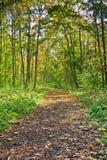 след листва Стоковое Фото