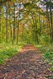 след листва Стоковая Фотография