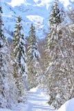 След лыжи ландшафта Snowy зимы стоковая фотография