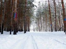 след лыжи пущи Стоковые Фото