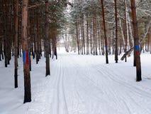след лыжи пущи Стоковое Фото