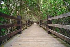 След мангровы Xinfeng в Hsinchu, Тайване Стоковые Изображения RF