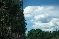 След на дороге стоковое изображение rf