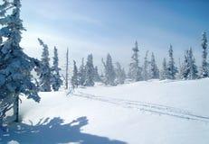 След на свежем снеге в лесе, покрытые снег спрусы лыжи стоковые фотографии rf