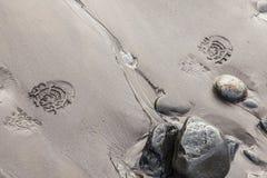 след ноги в влажном песке на береговой линии Стоковое фото RF