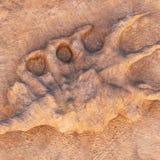 След ноги динозавра в утесе Стоковое Фото
