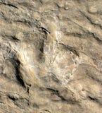 след ноги динозавра Стоковые Изображения