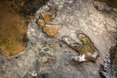 След ноги карнотавра динозавра на земном близко потоке на Phu Faek национальном Forest Park, Kalasin, Таиланде Вода внесенная в ж стоковые изображения