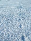 след ноги кота Стоковая Фотография