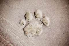 след ноги медведя Стоковая Фотография