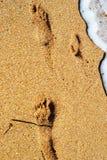 След ноги ребенка на песке на пляже стоковое фото rf