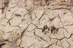 След ноги собаки на сухой почве стоковые фотографии rf