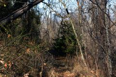 След оленей в лесе Стоковое Фото