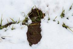След оленей косуль в покрытой снег степи Стоковые Изображения