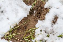 След оленей косуль в покрытой снег степи Стоковое Изображение RF