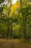 след парка осени Стоковая Фотография