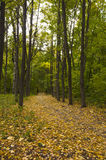 след парка осени Стоковые Изображения