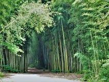 След парка островов Oconaluftee бамбуковый стоковые изображения