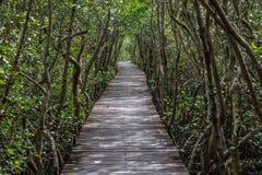 След природы леса мангровы тоннеля дерева на любимчике Laem Phak Bia стоковые изображения rf